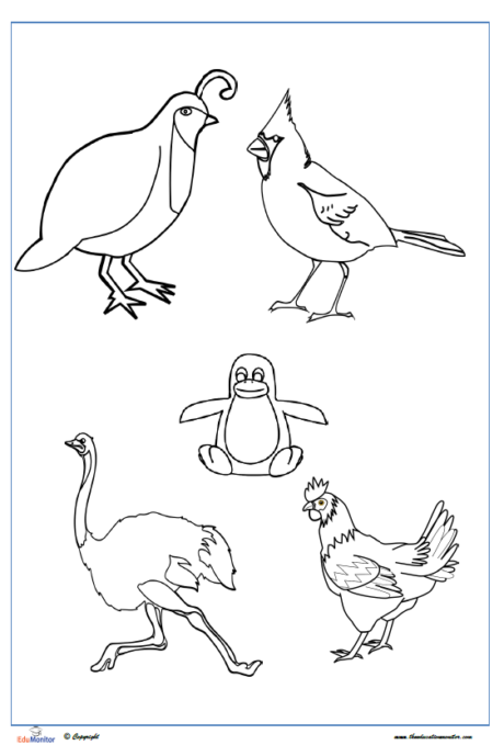 free printable coloring pages birds