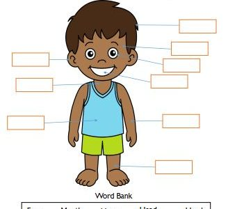 body parts science worksheets