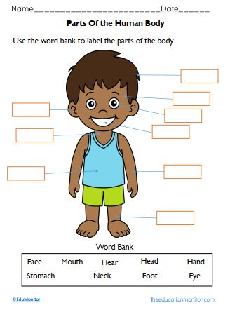 Free Body Parts Worksheets for Kids