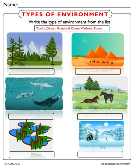 Types of Environments Worksheets